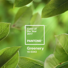 2017 Pantone Colour - Greenery